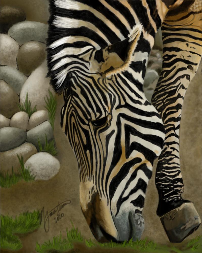 """""""Grazing Zebra"""" by Mary Farnstrom"""