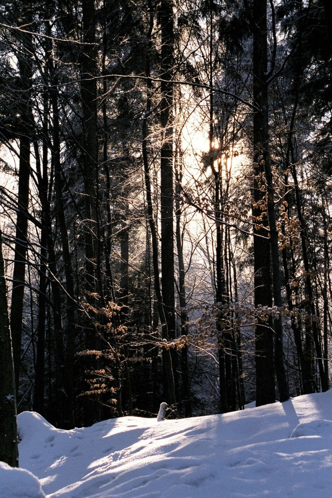 Light coming through the trees onto the snow